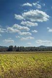 sky tuscany Arkivfoto