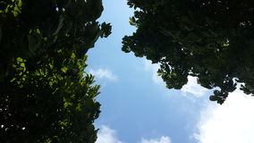 Sky view on Garda Lake. Between green leaves Royalty Free Stock Photo