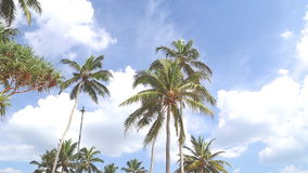 Sky view of palm trees in the light wind and clouds passing by. stock footage