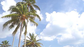 Sky view of palm trees in the light wind and clouds passing by. stock video footage