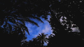 Sky view of palm trees time-lapse. Sky view of palm trees time-lapse stock video footage