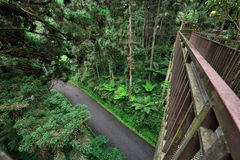 Sky walk in the Park, Taiwan. Walking on the sky walk through the forest in Xitou Nature Education Area which is a forest park in Nantou county, Taiwan Stock Images