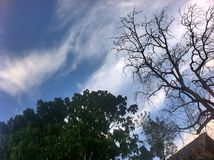 Sky watching. Trees nature blue Stock Photos