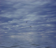 Sky and water. Photo about dark sky, waves and black silhouettes of birds stock illustration