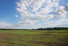 Sky with white cloud over green field Royalty Free Stock Images