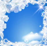 Sky and white flowers Royalty Free Stock Images