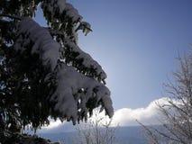 Sky, Winter, Tree, Snow stock photography