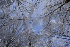 The sky in a winter wood Stock Photo
