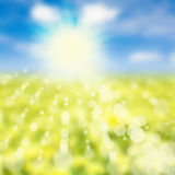 Sky and yellow meadow. Summer  or  spring  abstract nature background with grass in the meadow and blue sky with clouds in the back Royalty Free Stock Image