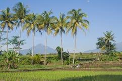 Кокос дерева с небом и горой предпосылки голубым стоковые фотографии rf
