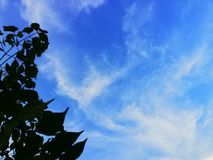 Skyblue. Leaves, white, skyy royalty free stock photography