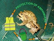 Skydd av amfibier Royaltyfri Bild