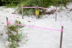 Skydd för rede för havssköldpadda, Key Biscayne Florida, USA Arkivbilder