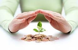 Skydda den nya affärsstarten - med händer och växten Arkivfoton