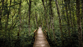 Skydda naturen, gräsplan! Fotografering för Bildbyråer