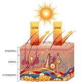 Skyddad hud med sunscreenlotion Fotografering för Bildbyråer