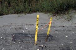 skyddad sköldpadda för loggerhead rede arkivfoton