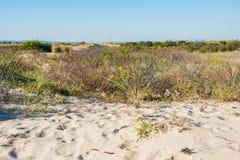 Skyddade sanddyn Fotografering för Bildbyråer