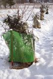 Skyddade unga äpple och körsbärsröda träd i vinter Arkivfoton