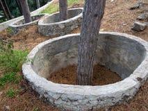 Skyddande cirklar av betong runt om träden Arkivfoton