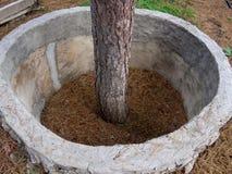 Skyddande strukturer av ringformig form runt om trädet Royaltyfria Bilder