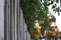 Skyddat staket Fotografering för Bildbyråer