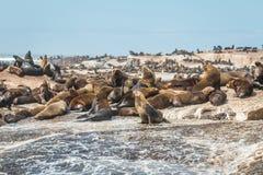 Skyddsremsaö i Cape Town Sydafrika Arkivfoto