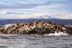 Skyddsremsaö nära Ushuaia royaltyfria foton