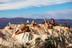 Skyddsremsaö nära Ushuaia royaltyfria bilder