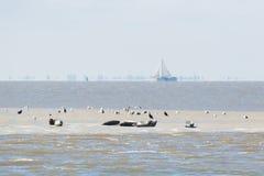 Skyddsremsa i det wadden havet Fotografering för Bildbyråer