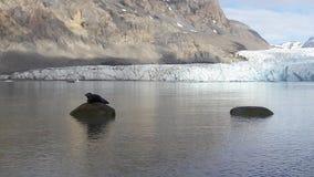 Skyddsremsa nära glaciären Arkivfoton