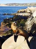 Skyddsremsa på stranden på La Jolla, San Diego California USA Fotografering för Bildbyråer