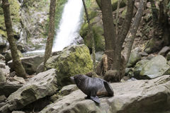 Skyddsremsaavel i skogen Nya Zeeland Royaltyfria Bilder