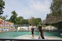 Skyddsremsashow i zoo Arkivbild