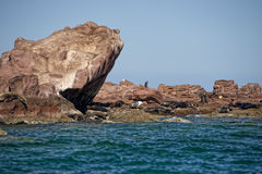 Skyddsremsasjölejon i Baja California Royaltyfri Foto
