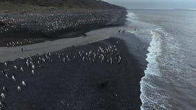 Skyddsremsor går till vattnet, och pingvin simmar ashore Andreev lager videofilmer