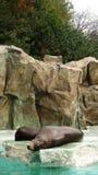 Skyddsremsor i den Korea zoo Fotografering för Bildbyråer