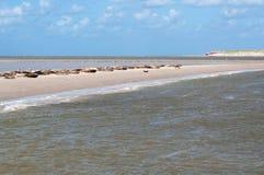 Skyddsremsor på en sand packar ihop framme av kusten av Nederländerna Royaltyfri Fotografi