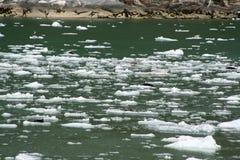 Skyddsremsor på ett isflöde i Alaska Royaltyfria Bilder
