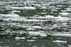 Skyddsremsor på ett isflöde i Tracey Arm Alaska Arkivbild