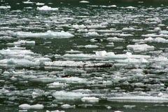 Skyddsremsor på ett isflöde i Tracey Arm Alaska Royaltyfri Bild