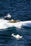 Skyddsremsor på ett stycke av att sväva is Arkivfoton