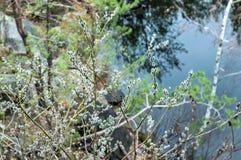 Skyddsremsor planterar på träden royaltyfria bilder