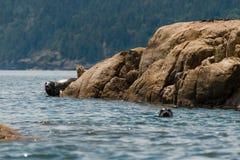 Skyddsremsor som kopplar av på, vaggar nära vatten Arkivfoton
