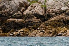 Skyddsremsor som kopplar av på, vaggar nära vatten Arkivbilder