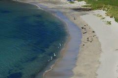 Skyddsremsor som solbadar på den Spiggie stranden Royaltyfri Bild