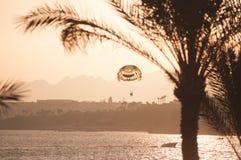 Skydiver sobre a praia de Egipt fotos de stock royalty free