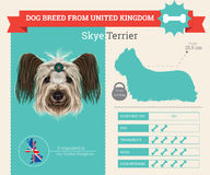 Skye Terrier dog breed  infographics Royalty Free Stock Photos
