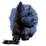 Skye Terrier lap dog tiny pet of small size digital art. Puppy looking in distance breeding domestic animal closeup. Watercolor portrait, isolated muzzle of royalty free illustration