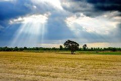 Skyen efter regnar royaltyfria bilder